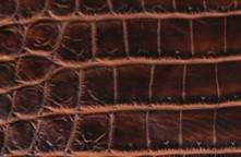 Crocodile Full Grain Leather Sample