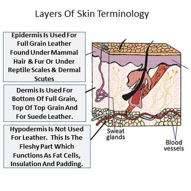 Here a diagram of the three layers of skin