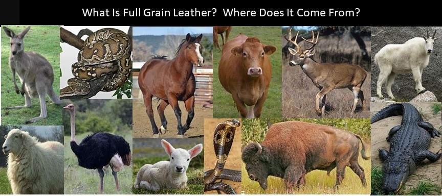 Here are animals and reptiles whose hide and skin are used for full grain leather